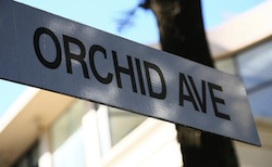 5 Secrets of Orchid Avenue