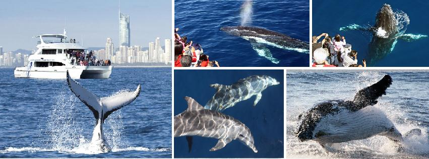 Sea World Invites You to See the Whales!